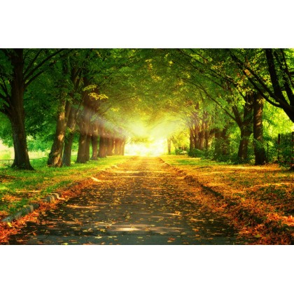 Δρόμος στο Δάσος